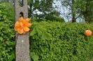 Święto Kwiatów_34